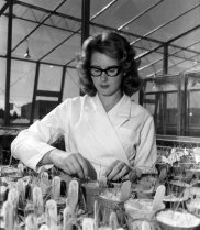 A research technician examines seedling growth in an early Phytotron pot experiment.