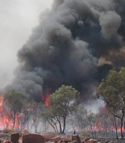 Plume of black smoke rising from burning trees in the background, with burnt ground and rocks in the foreground. (Image: Susan Campbell, CSIRO)