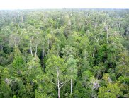 Aerial view of tropical forest in Borneo (Image: H-D Viktor Boehm)