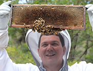 A beekeeper inspects a honeycomb with a bee swarm on it.