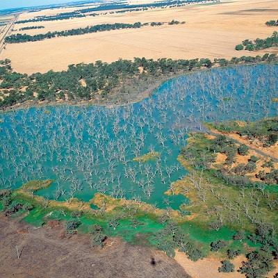 Aerial view of salinity damage in wetlands near Griffith
