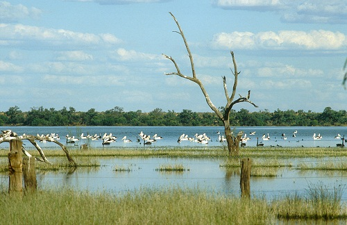 Coombool Swamp upstream from Renmark