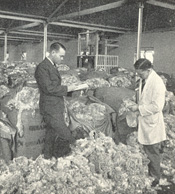 A woolbuyer and his junior 'pencillor' assessing yield and fineness