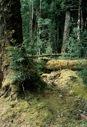 Cool temperate rainforest