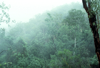 Rainforest in North Queensland