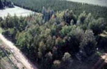 The species in trial in the foreground and the radiate pine trial at the rear