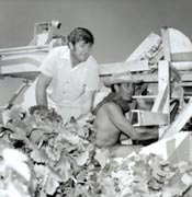 Two men on a grape harvesting machine