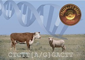 Image highlighting the award of the CSIRO Chairman's medal to the bovine and ovine genomics research program in 2010