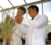 CSIRO Plant Industry researchers Dr Peter Waterhouse and Dr Ming-Bo Wang