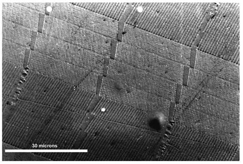Optical micrograph of a small section of a Pixelgram OVD microstructure showing a few diffraction grating pixels.