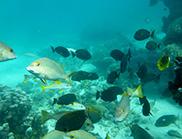 School of fish swimming around coral at Ningaloo reef.