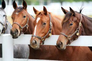 Four horses