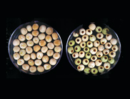 Photo showing two bowls of peas. Weevil resistant peas on the left and conventional peas on the right.