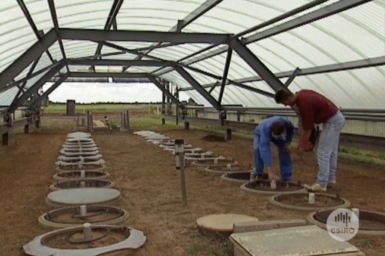 Researchers at work with large drainage lysimeter facility.