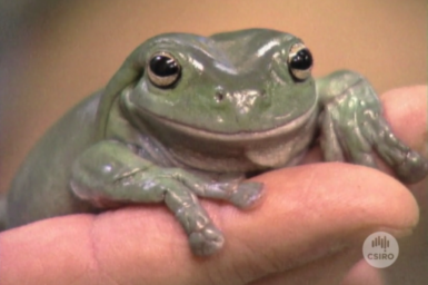 Close up of frog resting on a hand