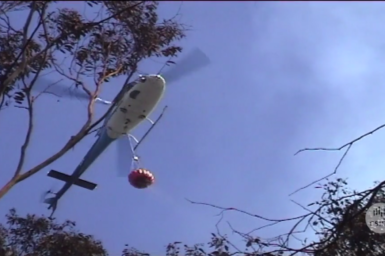 Fire bombing helicopter hovering above gum trees.