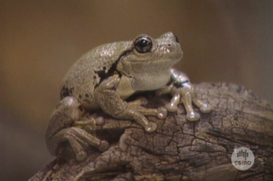 Frog seated on rock