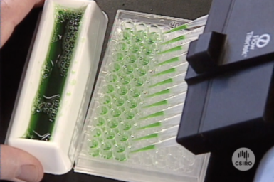Multi-Channel Micropipette being used in laboratory.