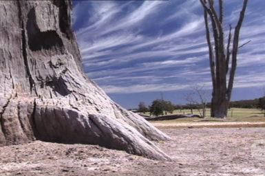 Dead trees in salt affected landscape.