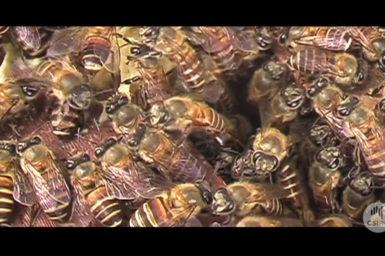 Bees inside beehive.