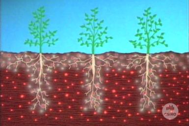 Graphic illustrating benefits of soil slotting technique.