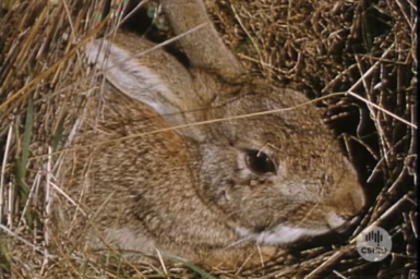 Close up of rabbit in dry grass